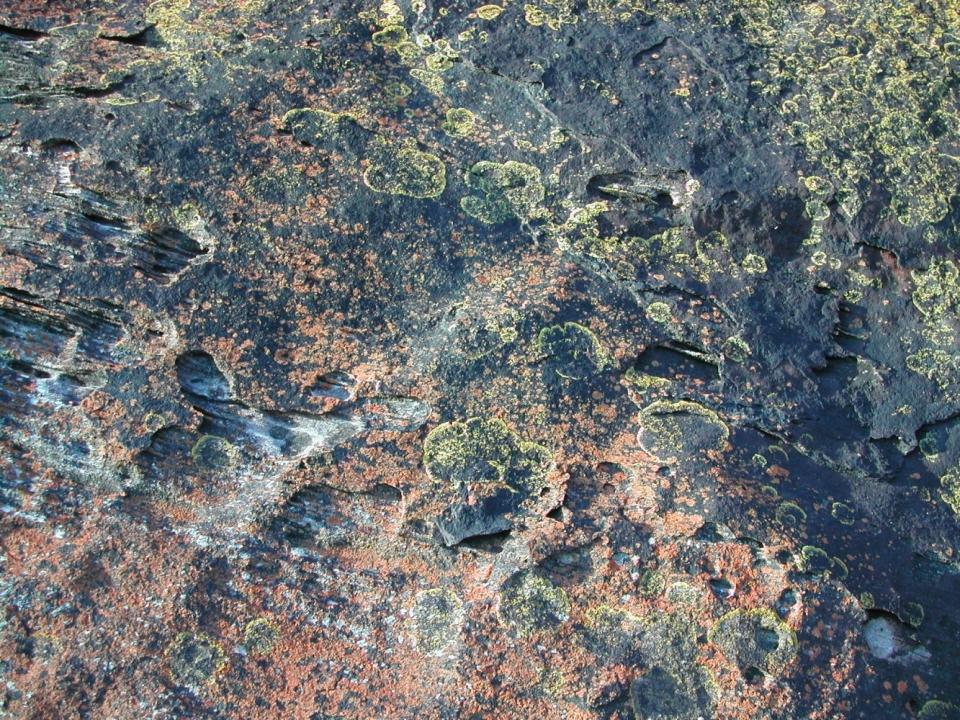Lichen on rocks south shore coastline