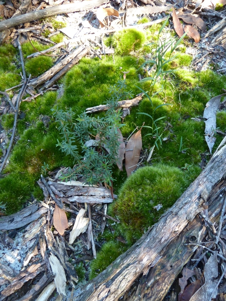Forest floor southwest corner